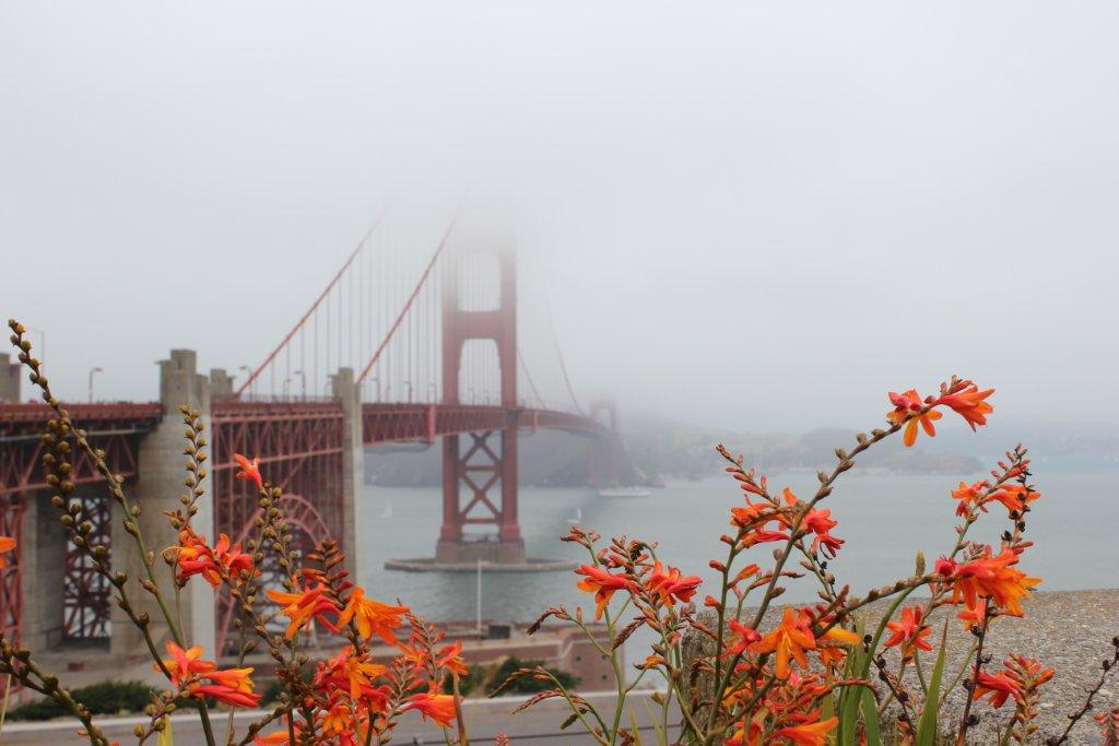 San Francisco Golden Gate Bridge Flowers JetSetting Fools