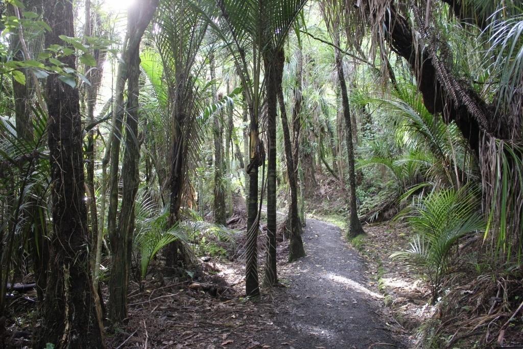 Hiking Paths of Titirangi Beach New Zealand