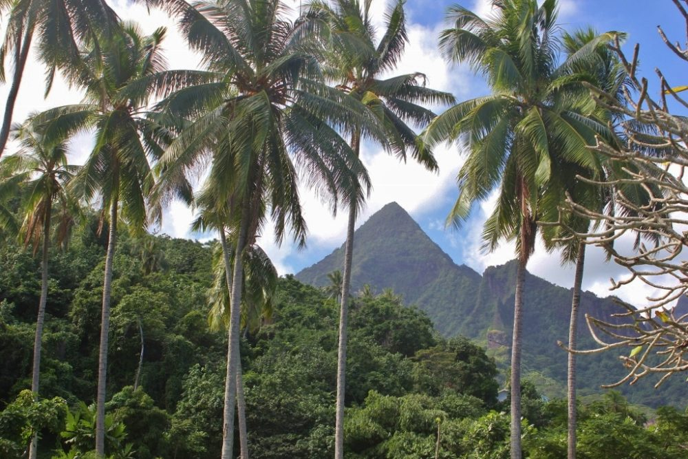 Moorea French Polynesia Palm Trees and Mountains
