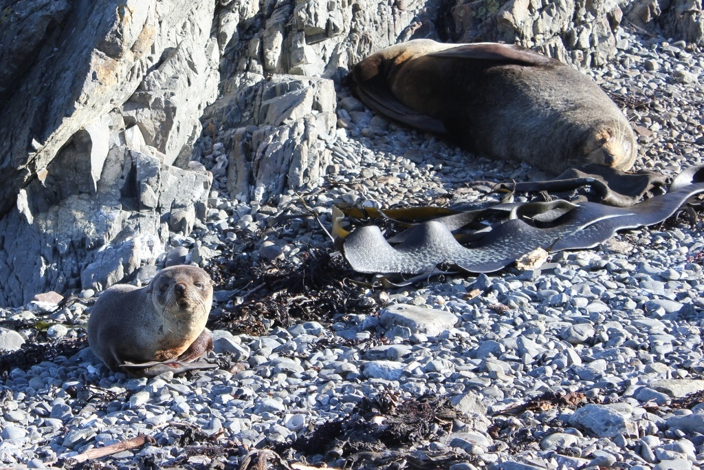 Seal Colony at Sinclair Head Wellington, New Zealand JetSetting Fools
