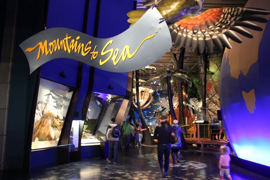A Sunday in Wellington, New Zealand at Te Papa Museum JetSetting Fools