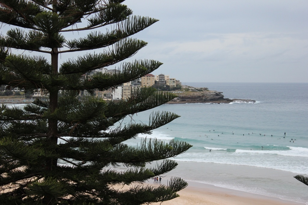 Bars in Bondi Beach: Bondi Social - A view through the pine trees from Bondi Social's balcony