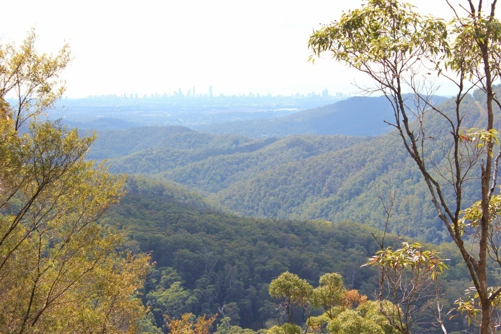 Springbrook National Park Lookout: Wunburra