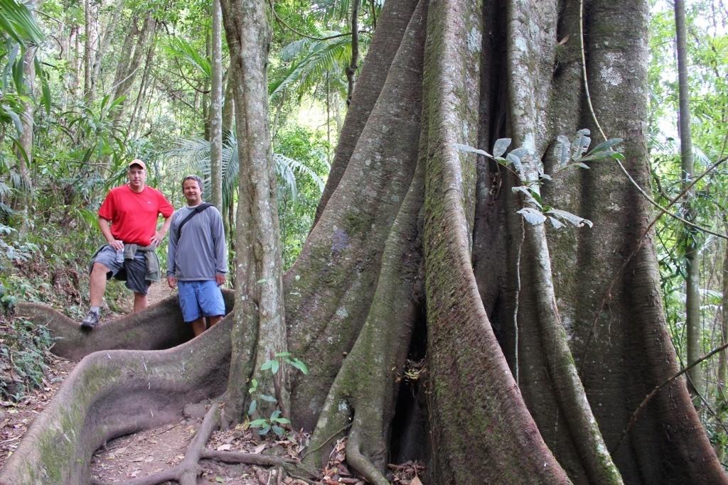 Springbrook National Park Walk through the Gondwana Rainforest