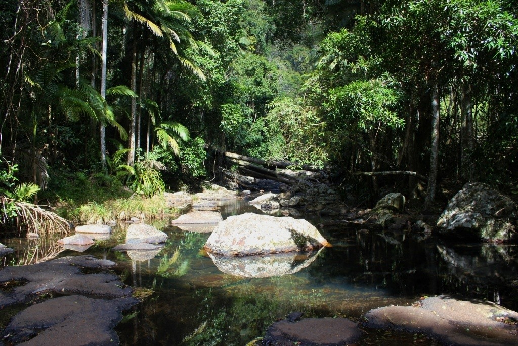 Popular Springbrook National Park swimming hole, Warringa Pool