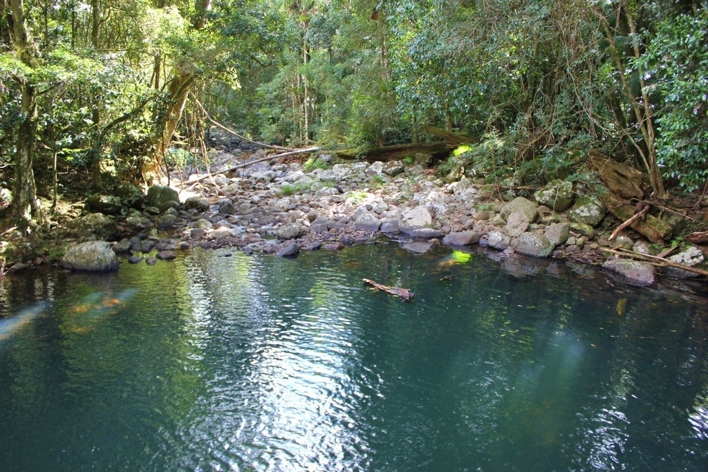 The Warringa Pool swimming spot at Springbrook National Park