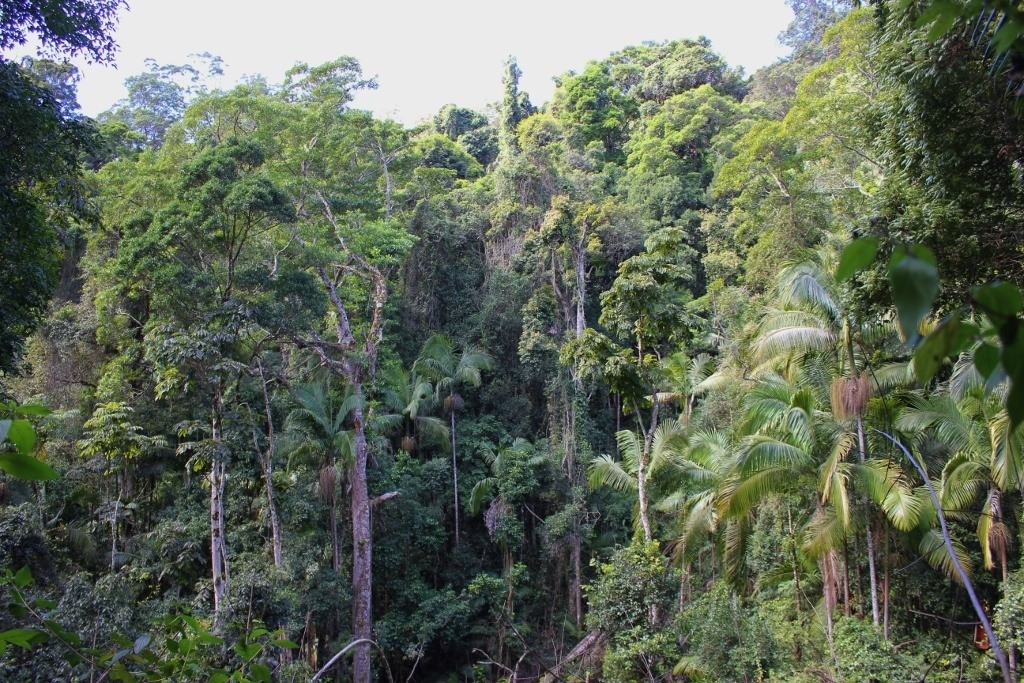 Part of the Gondwana Rainforest at Springbrook National Park