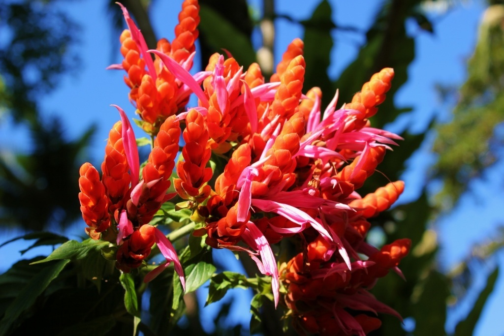 Cairns Botanic Gardens JetSetting Fools