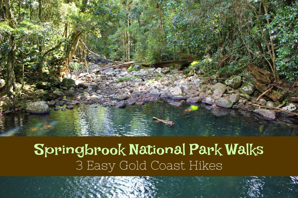 Springbrook National Park Walks 3 Easy Gold Coast Hikes by JetSettingFools.com