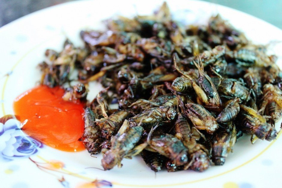 Plate of fried crickets on Dalat Tour through Vietnam Central Highlands
