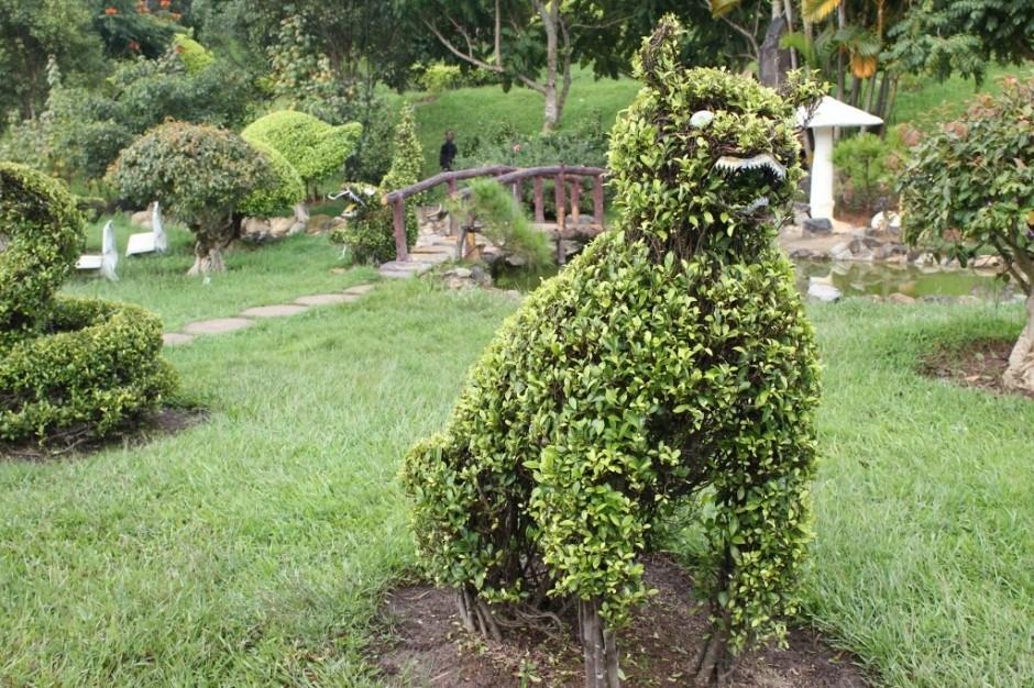 Sightseeing in Dalat, Vietnam: Dalat Flower Gardens
