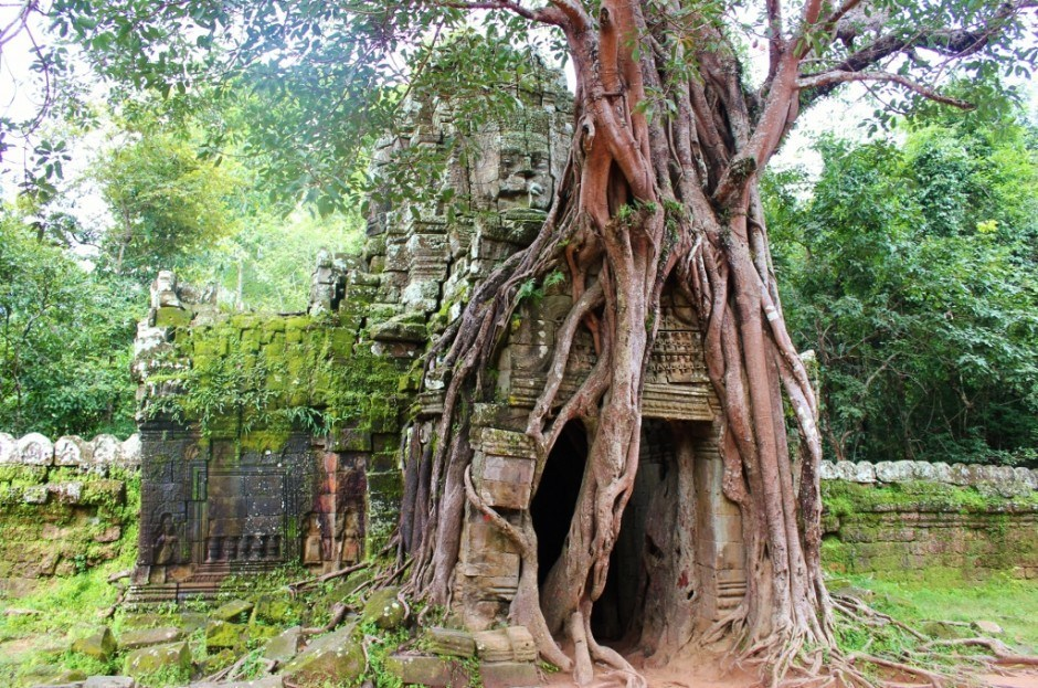 Angkor Temple Tour: Ta Som - This sacred fig tree has practically taken over the eastern entrance