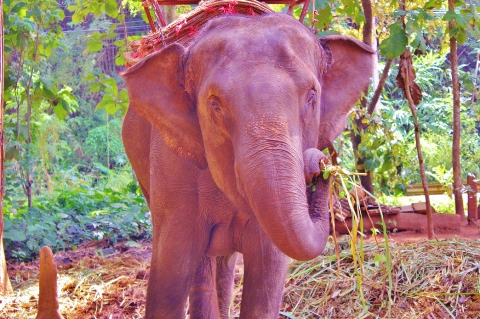 Chiang Mai trekking trip: Playing with elephants
