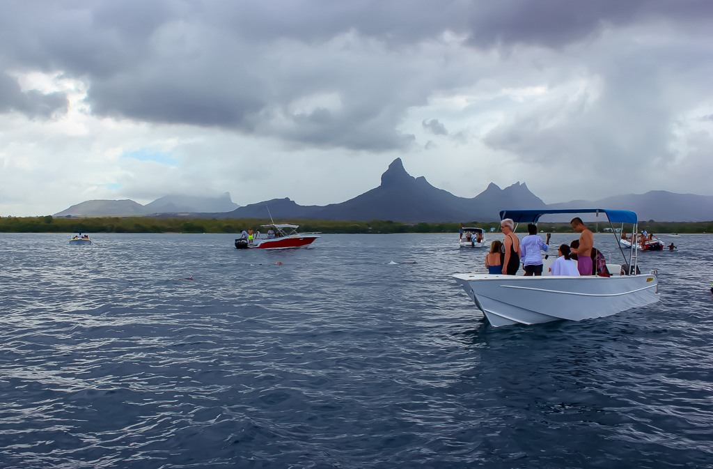 Swim with dolphins in Mauritius - YouTube