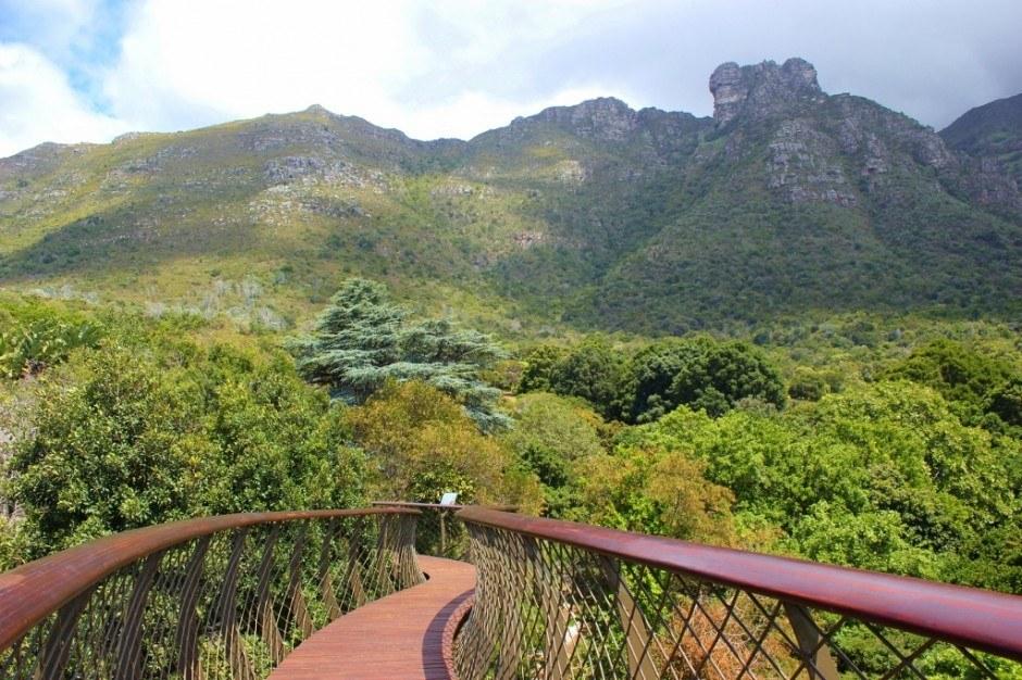 Visiting Kirstenbosch Botanical Garden: The Tree Canopy Walkway winds through the treetops