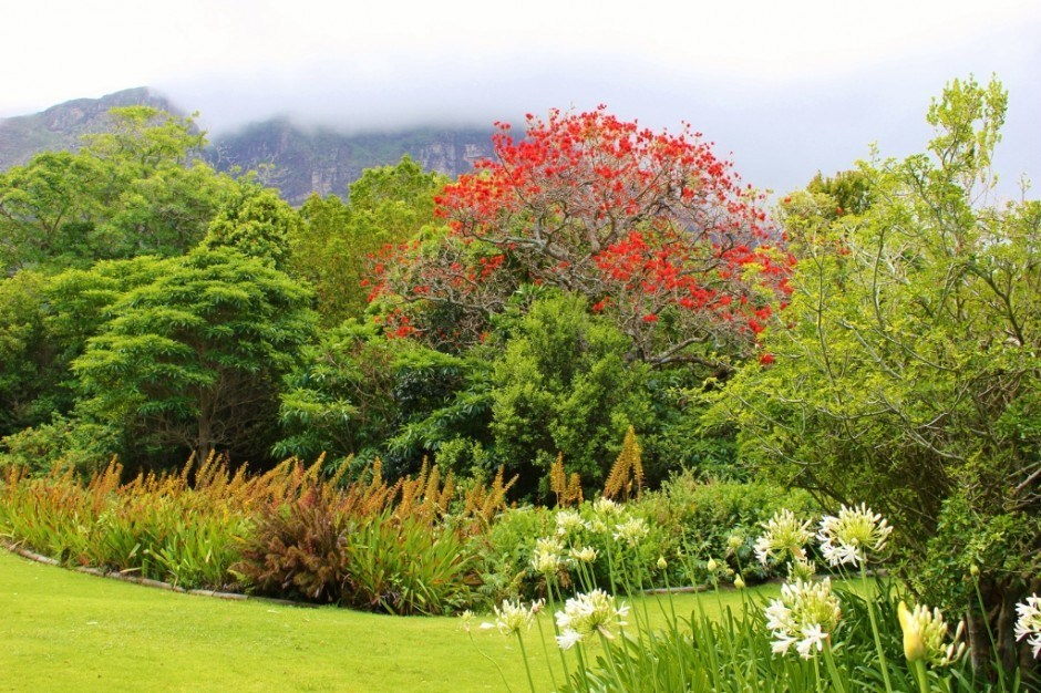 Visiting Kirstenbosch Botanical Garden: Bright colorful flowers