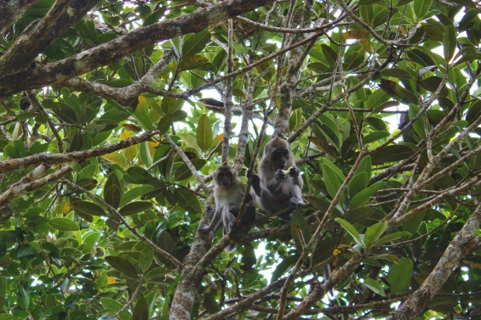 Southwest Mauritius Nature Tour: Black River Gorges Lookout Point - Wild monkeys playing in the trees