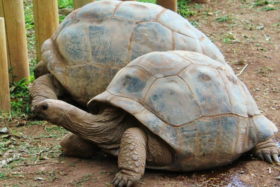Southwest Mauritius Nature Tour: The 7 Colored Earth - hundred year old tortoises