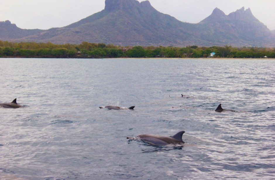 Swimming with Dolphins on Mauritius