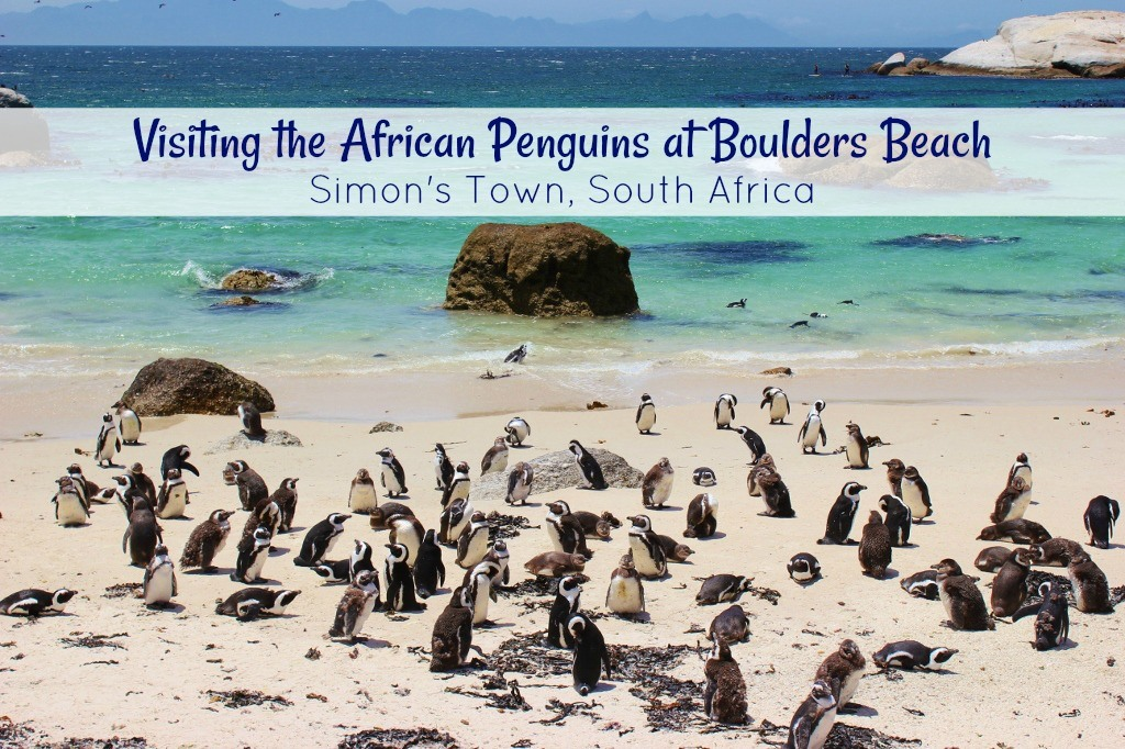 African Penguins At Boulders Beach In