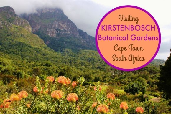 Visiting Kirstenbosch Botanical Garden Cape Town, South Africa by JetSettingFools.com