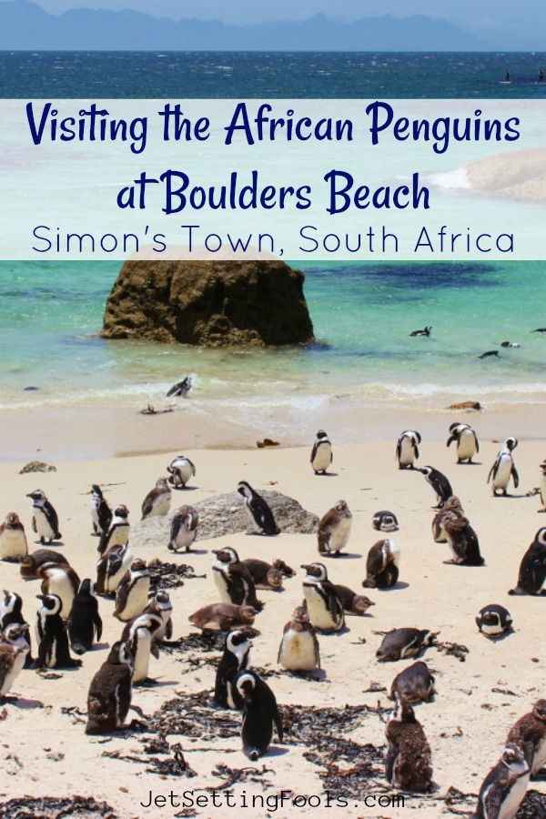 Visitng Pengins at Boulders Beach in Simon's Town, South Africa by JetSettingFools.com