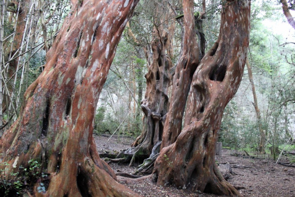 Best Hikes of our Journey: Forests of Arraynes at Parque Municiple Llao Llao