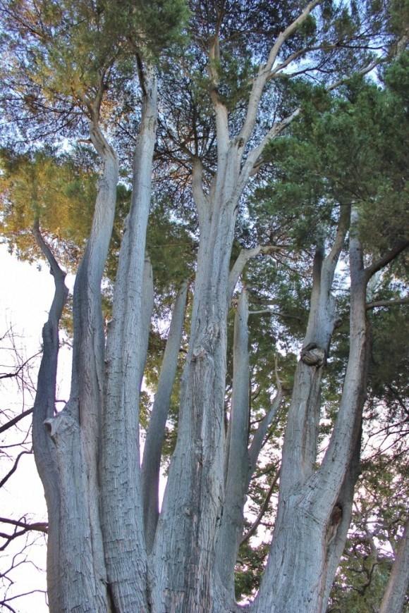 Royal Botanic Gardens in Melbourne