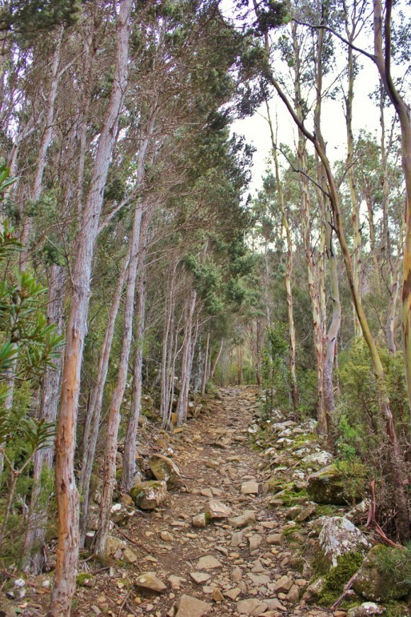 Hiking down Mount Wellington through the forest