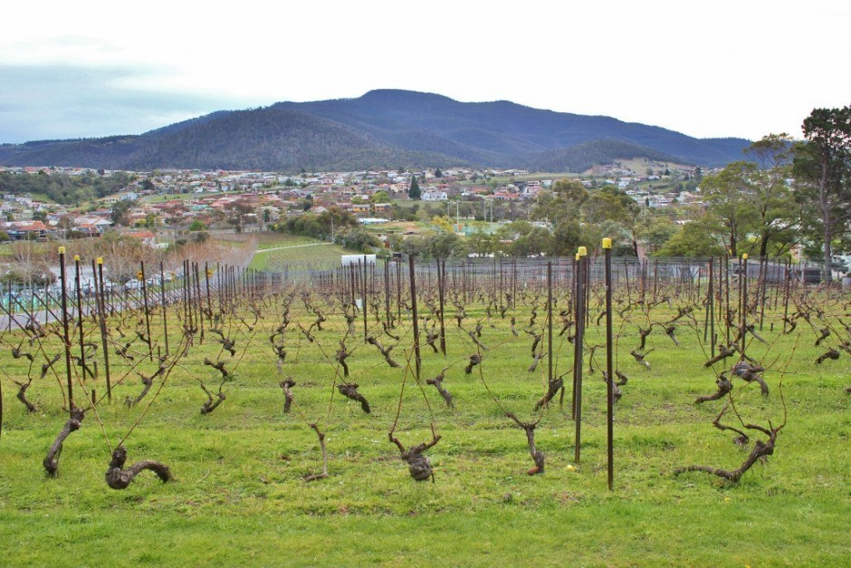 Hobart without a car: Moorilla Estate