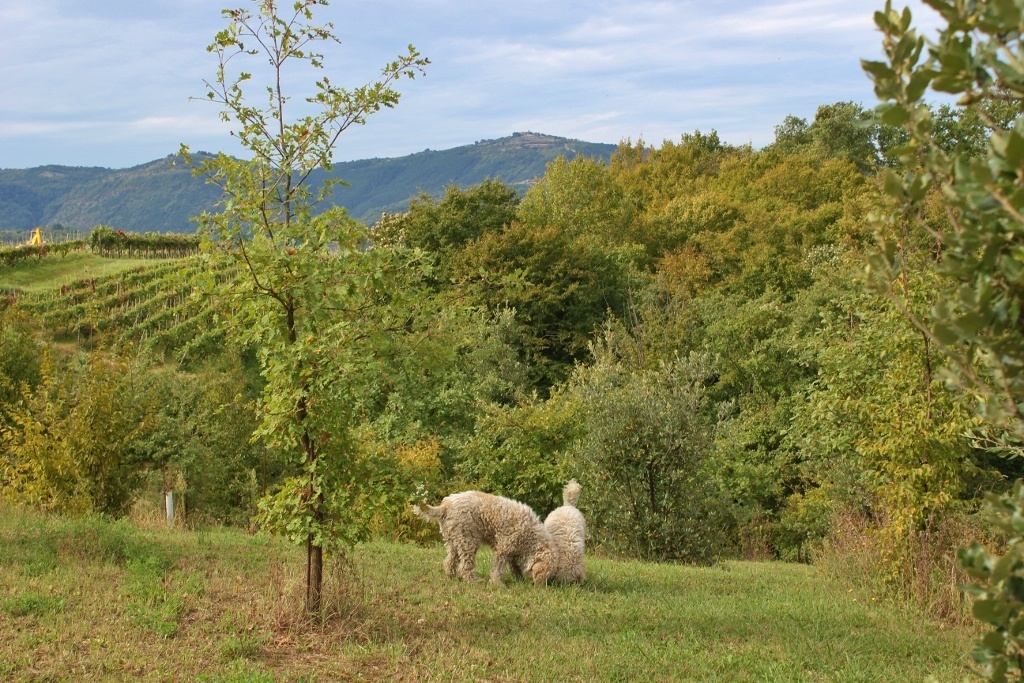 Truffle Hunting: An Istrian Day Trip, Part 1