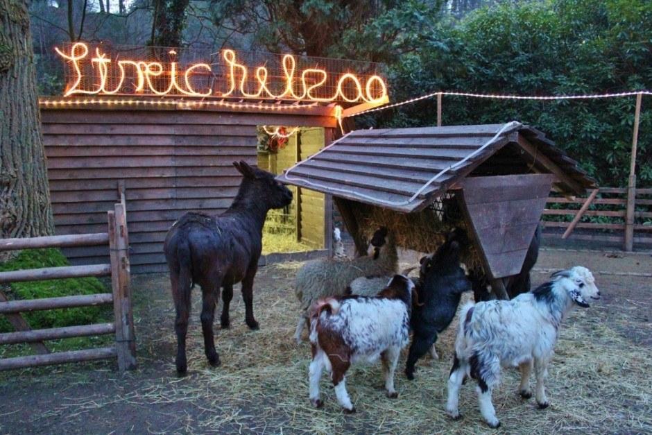 Christmas Markets near Nijmegen Netherlands Kleve Germany Petting Zoo