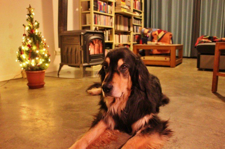 Housesitting for the holidays Nijmegen Netherlands Berus