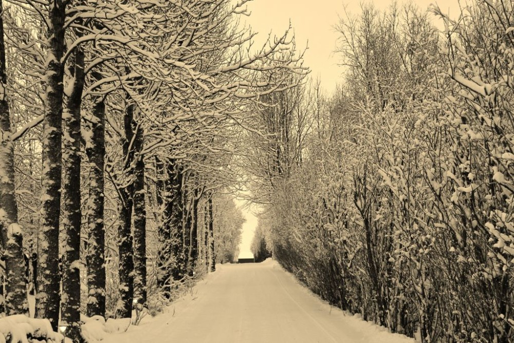 Iceland in Wintertime Snowy Tree-lined Road JetSetting Fools