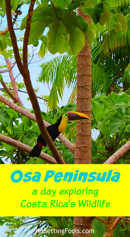 Osa Peninsula JetSetting Fools