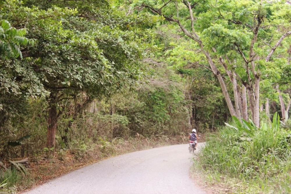 Osa Peninsula Road into Forest