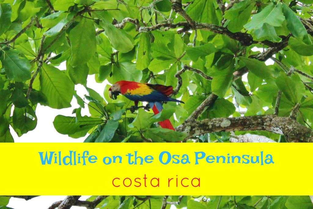 Wildlife on the Osa Peninsula Costa Rica by JetSettingFools.com