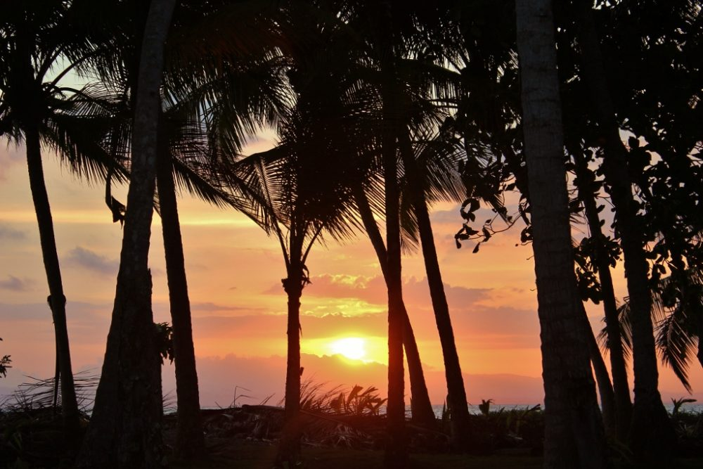 Sunset through the palm trees on Playa Zancudo, Costa Rica
