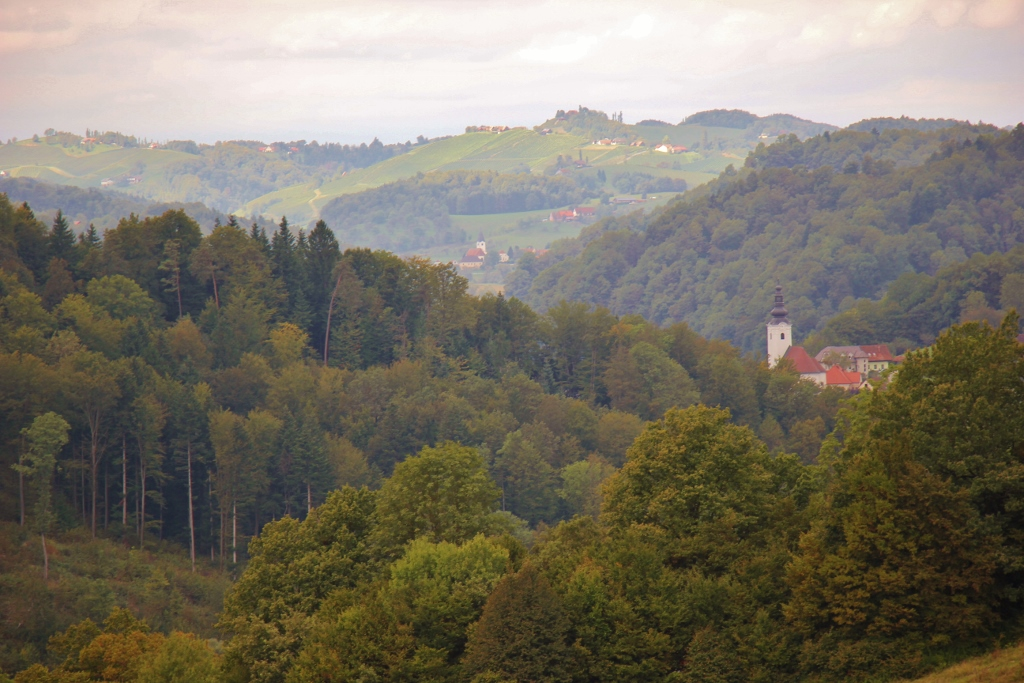 Hillside views from Hisa Vina Doppler in Slovenia