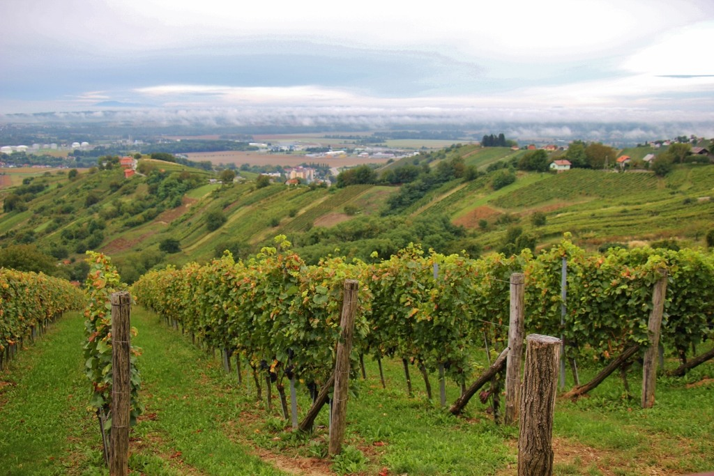 Hisa Vina Cuk Winery Vineyards in Slovenia