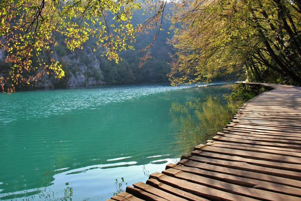 Yellow leaves on overhanging branch, Plitvice Lakes National Park, Croatia
