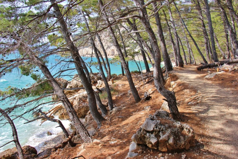 Shoreline path shaded by evergreens, Makarska, Croatia