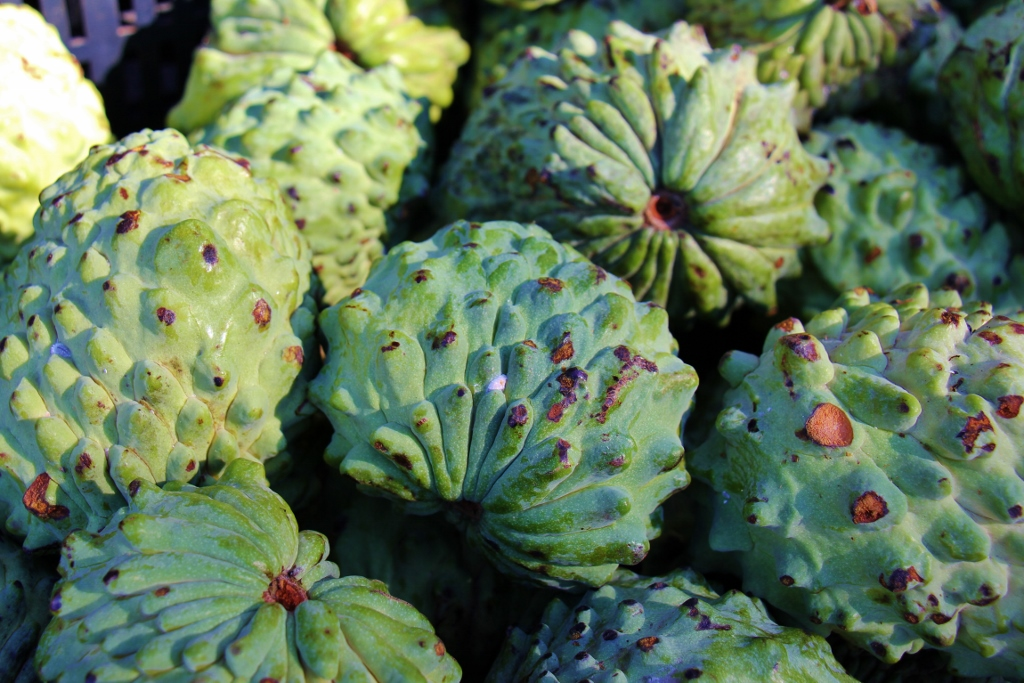 Fresh Custard Apples for sale at Powerhouse Farmers Market in Brisbane, Australia