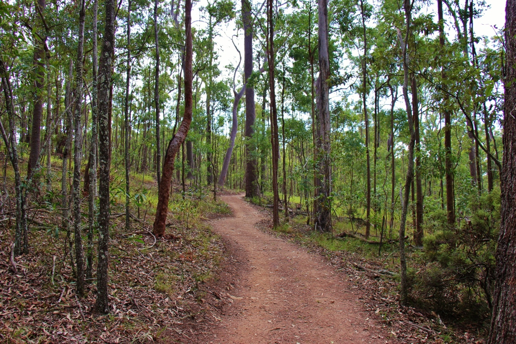 Curving dirt hiking trail at Mt. Coot-tha in Brisbane, Australia