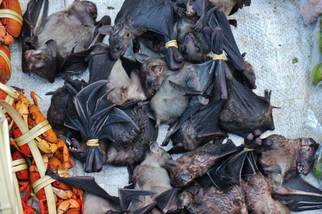 Live bats for sale at Morning Market in Luang Prabang, Laos
