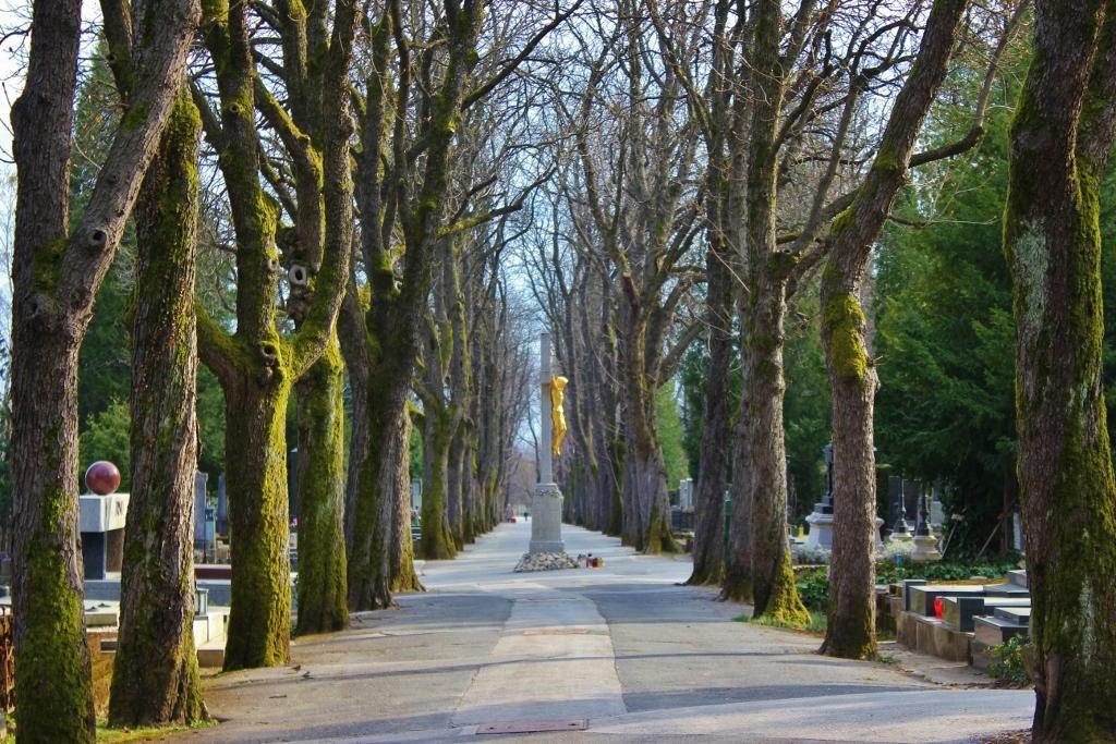 Tree-lined walkway at Mirogoj Cemetery in Zagreb, Croatia